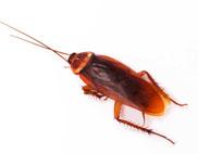 american roach control silverfish control •roach control •exterminator •bug man